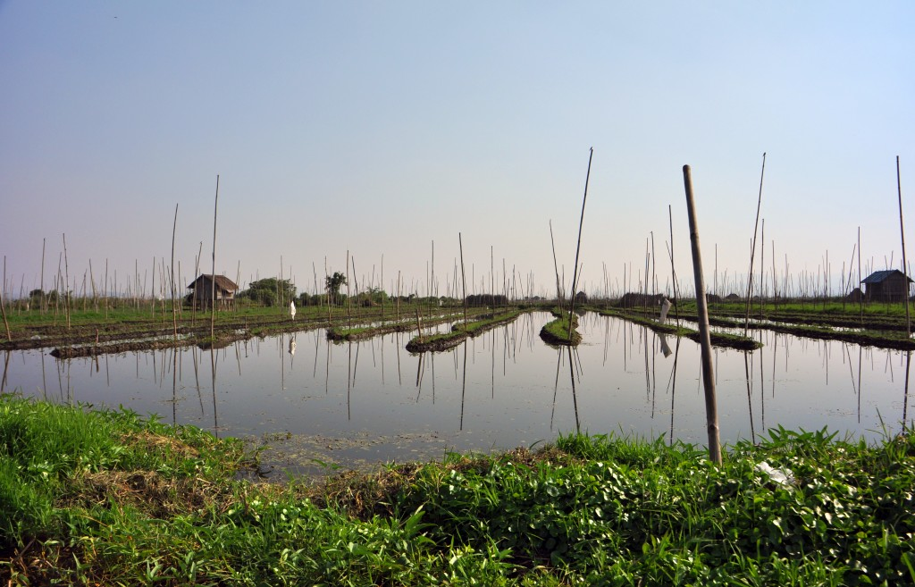 Floating Gardens Inle Lake Myanmar
