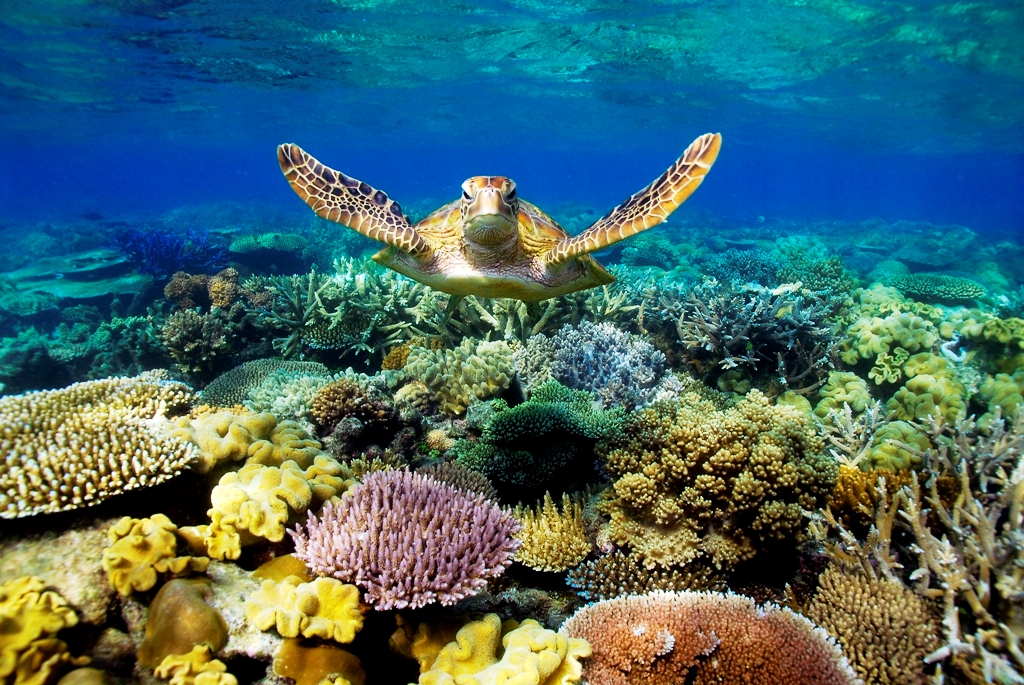 hero-shot-turtle-great-barrier-reef